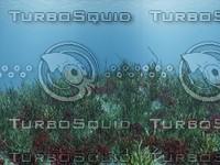 underwater.vue