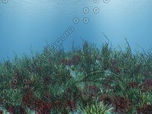 underwater vue 3d model