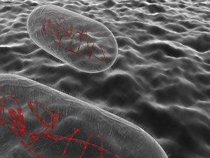 3d model pill bacteria