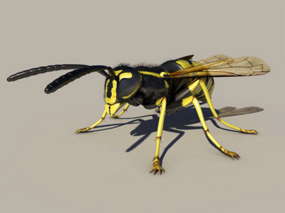 wasp 3d 3ds
