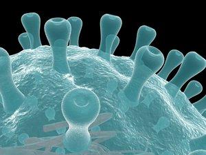 herpes virus 2 3d model