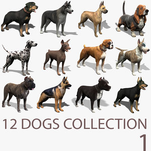 3d extensive dog model