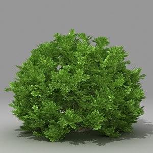 3d busch
