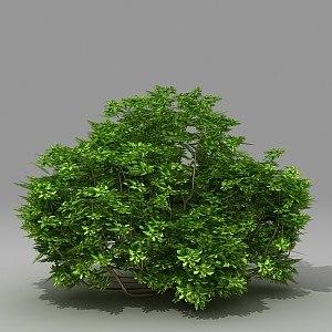 3d model busch