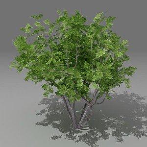 busch 3ds