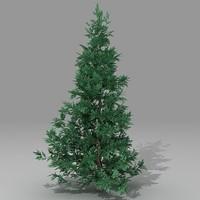 Conifer 3ds.zip