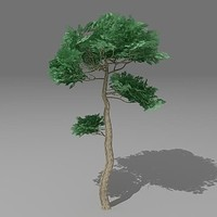 3d pinus tree model