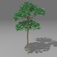 3d model pinus tree