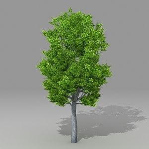 3d tree model