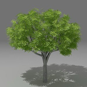 lwo tree