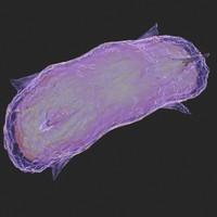 3d bacillus cell micro model