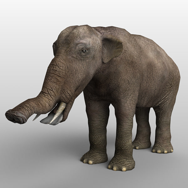 platybelodon elephant 3d model