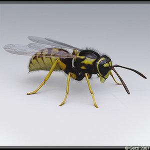wasp vespula germanica 3d model
