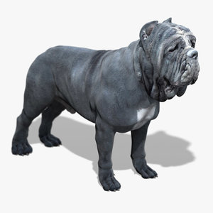 neapolitan mastiff 3d model
