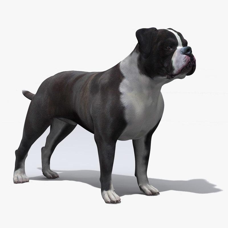 american bulldog 3d model