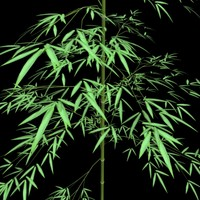 bamboo tree outdoor 3d model