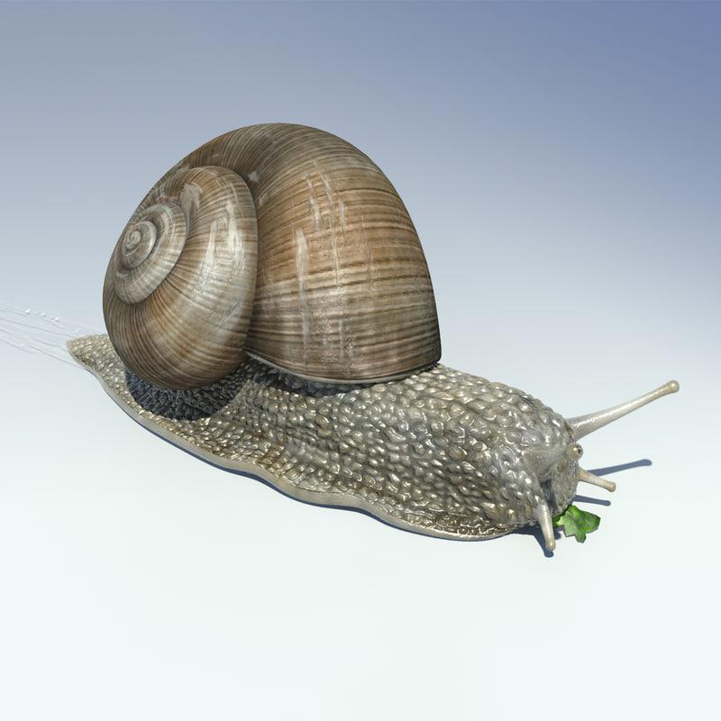 snail helix pomatia 3d model