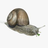 Snail (Helix Pomatia)