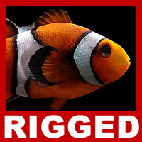Clownfish (Rigged)