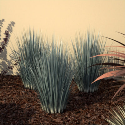 3d ornamental grass maxwell render model