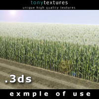 3D Cornfield  Model - High Resolution Texture