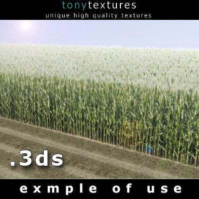 cornfield - resolution 3d model