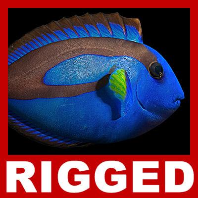 rigged regal blue tang 3d model