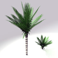 c4d palm tree sago