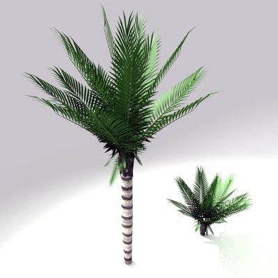 c4d palm tree sago