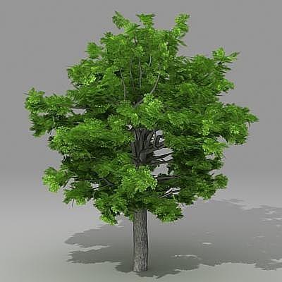 trees 3d max