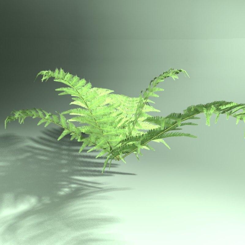 3d model of fern shockwave polys