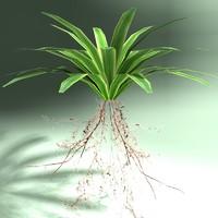 3d model fern carex plant