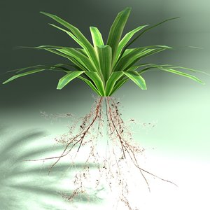 3d model fern carex plant