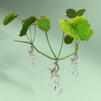 shockwave clover plant leaf 3d model