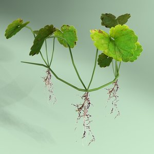 shockwave clover plant leaf 3d model