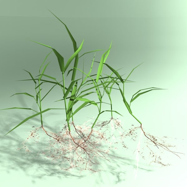 3d patch grass