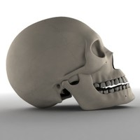 female skull 3ds
