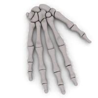 3d hand bones model