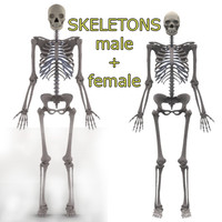 3ds male female skeletons