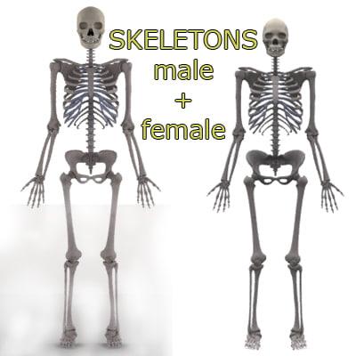 3ds Male Female Skeletons