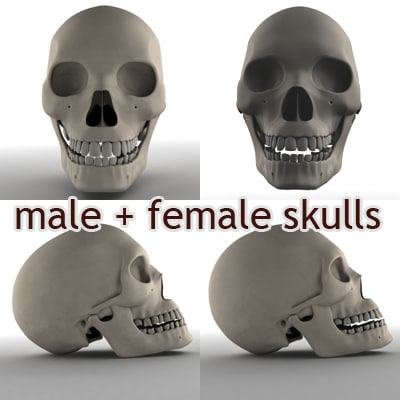 male female skull 3d model