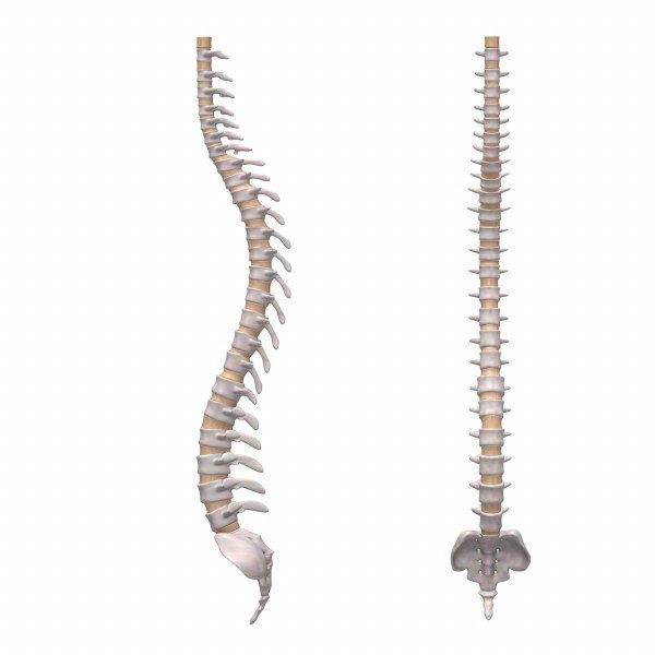 human spine 3ds
