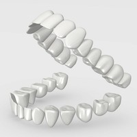 human teeth 3d model