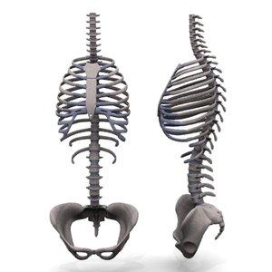 3d model skeleton body