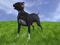 3d dog canine