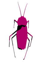 Cockroach - low poly, rigged