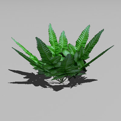 3d fern plant