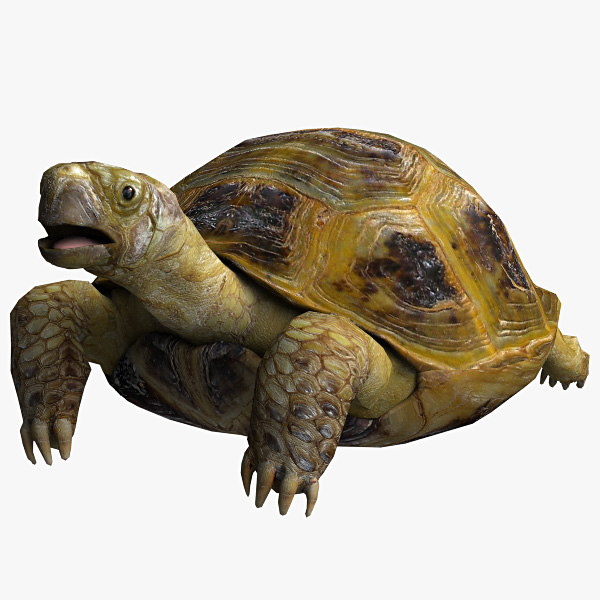 resolution turtle max