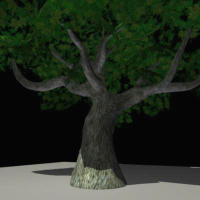 old maple tree 3d ma