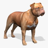bordeaux dog 3d model